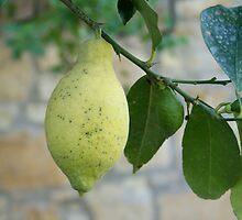 Italian Lemon by HeidisStudio