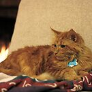 Fireside Cat by Jan  Wall