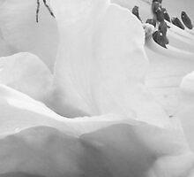 spider on rhodo petal lip - b/w image for clarity by gaylene