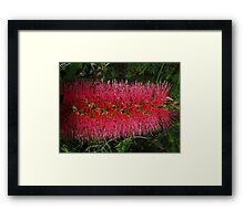 """Soft"" Framed Print"