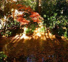 reflection & leaves by Sheila McCrea
