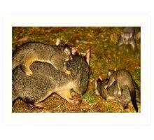 The Possum Nursery Art Print
