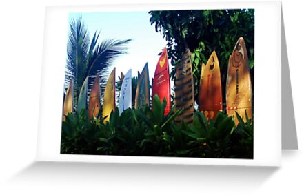 A surfboard fence by Marjorie Wallace