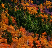 White Mountains National Forest, Crawford Notch, New Hampshire by Richard VanWart