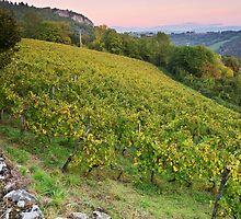Autumn dusk on Roussette vineyard by Patrick Morand