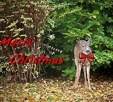 Merry Christmas Doe Deer With Bow Christmas Card by Jonice