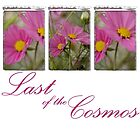 Last of the Cosmos by Rene Hales