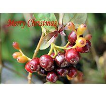 Berries II Photographic Print