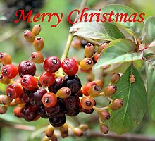 Christmas Berries I by Donna Adamski
