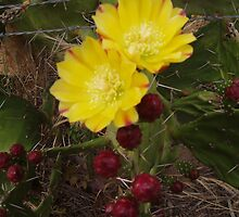 Prickly Pear by elphonline