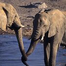 Etosha Elephants encounter by cascoly