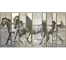 Natural Horses - Textured Photographic Print
