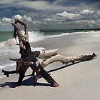 driftwood by stelfox1