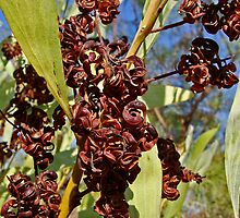 Fruits of the bush by Elena Martinello