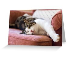 Lazy Cat Greeting Card