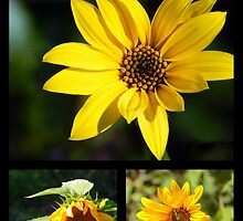 My yellow bloomers by Karen Cook