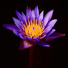 Lotus by fatalsweets