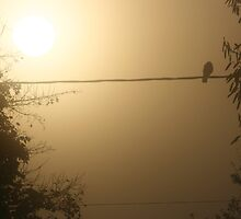Bird on the Wire by Pamela Jayne Smith