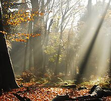 Autumnal sunbeams at Gooilust by jchanders
