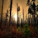 After The Fire by Charles & Patricia   Harkins ~ Picture Oregon