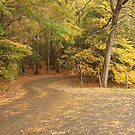 Cades Cove Loop by Gary L   Suddath