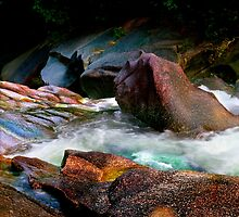 Nature's Palette Of Colors by Angelika  Vogel