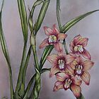 Cymbidium Orchid by Philip Holley