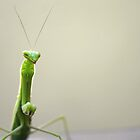 Mantis by Sheraz Khan