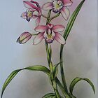 Pink Cybidium Orchid by Philip Holley
