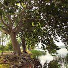 Lake Trees by Kallian
