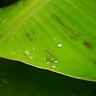 Banana Leaves by Tiffany  Nabors
