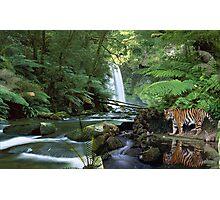 1045-Rainforest Reflections  Photographic Print