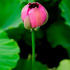 pink lotus 3 by fatalsweets