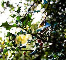 Holly by Jonathon Wilson