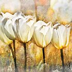 White Tulips  by Sabine Spiesser