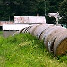 Hay Rolls on the Side of the Road by ctheworld