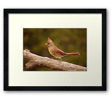 The Cardinal strut Framed Print