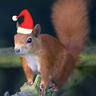 Santa Squirrel by Krys Bailey