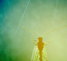 Lacewing Nebula  by Stanislav Sokolov