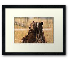 Bear on the prairie Framed Print