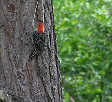 Woodpecker by Shayef
