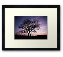 Two Trees embracing Framed Print