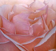 Dreamy by Cheryl  Lunde