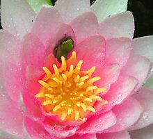 Froglet in a Blossom by Tibby Steedly
