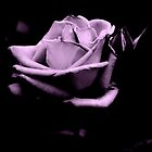 Black and White Purple Rose by Joseph Bailouni