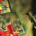 Humming Bird... by Sheila  Pasket