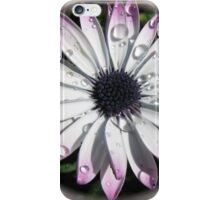Raindrops on Cape Daisy - Vignette iPhone Case/Skin