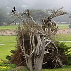 Crows, a Cypress Tree and a Golf Course by Martha Sherman