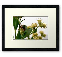 Metallic green bee Framed Print