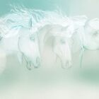 Silver Manes'... by Valerie Anne Kelly